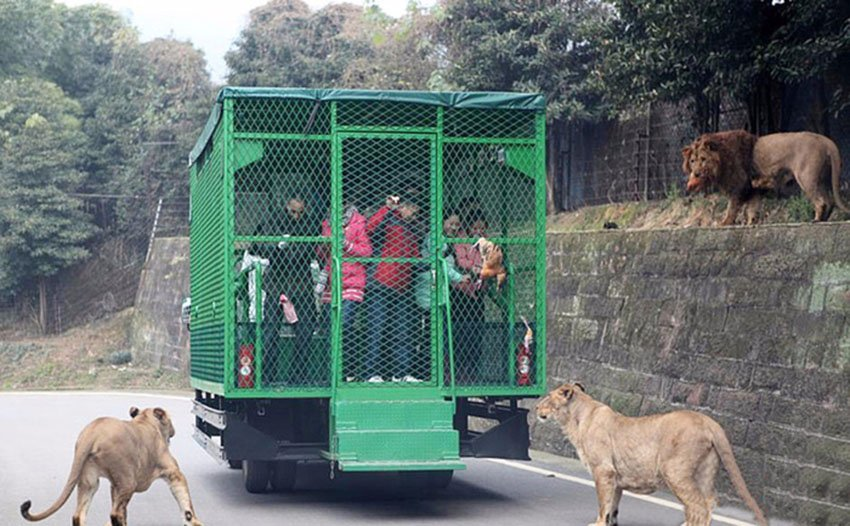 Зоопарк в восьми километрах от центра Чунцина, Китай.