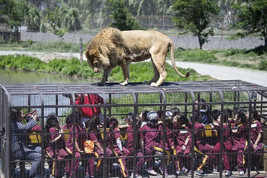 Зоопарк в восьми километрах от Чунцина, Китай