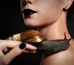 Применение улиток и змей в китайской косметологии