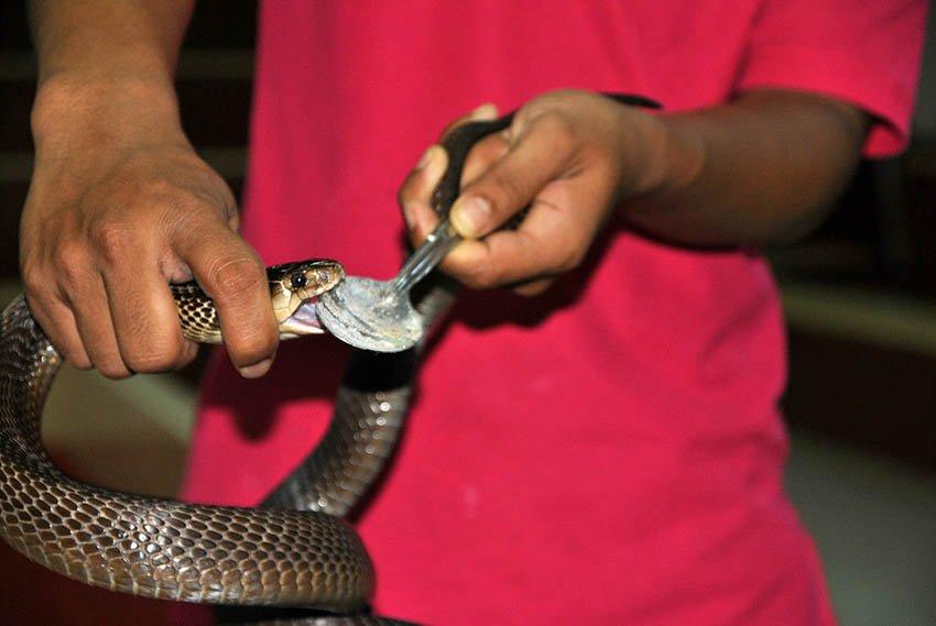 Змеи в косметологии
