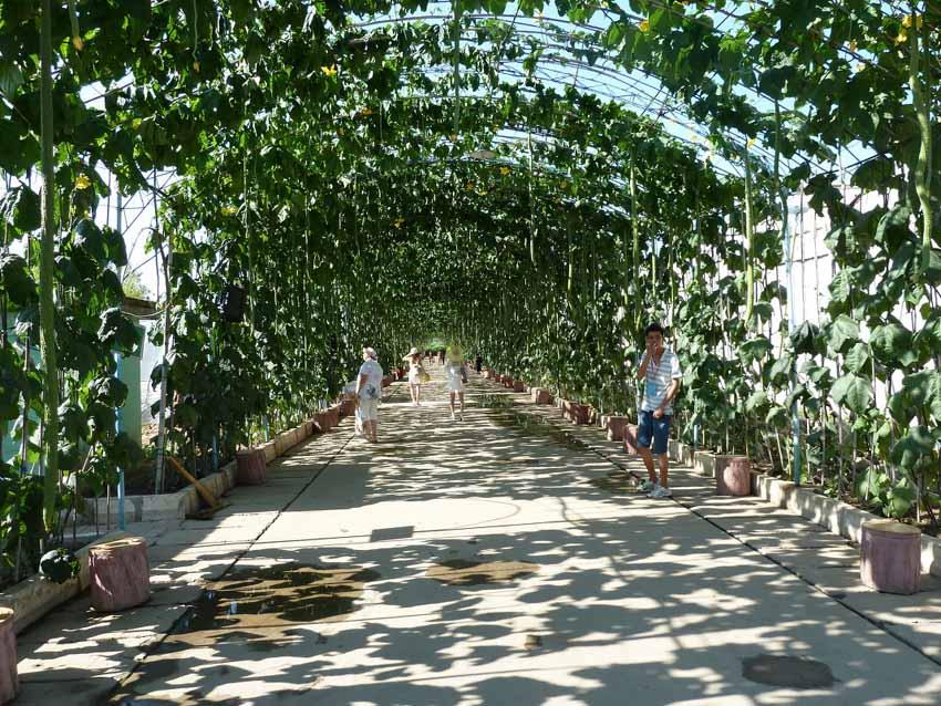 Ботанический сад, Бэйдайхэ, Китай