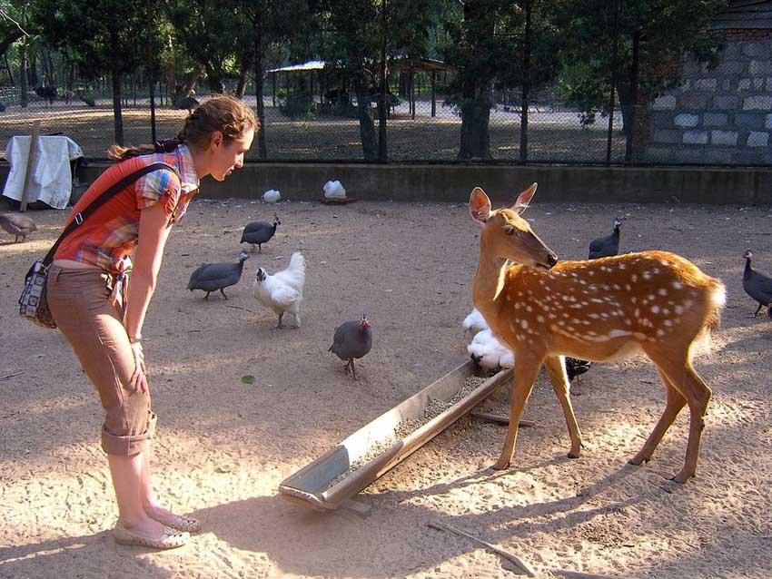 Сафари парк в Бэйдайхэ, Китай