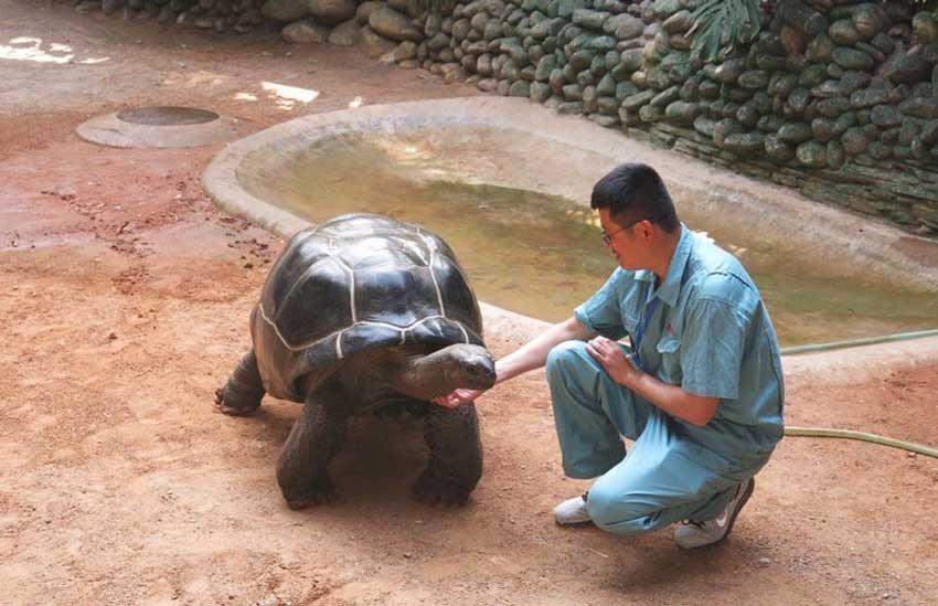 Зоопарк Циндао в Китае