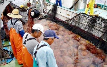 Что в Китае делают с медузами