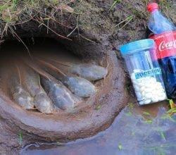 Как китайцы ловят рыбу с помощью кока-колы в норах